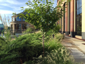cherry-tree-museum-in-background